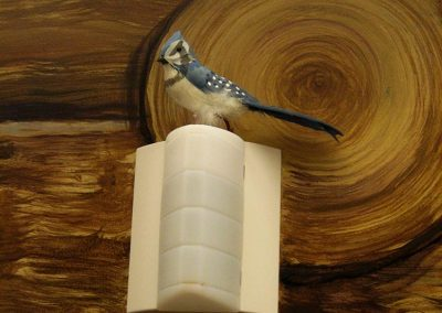 Log Cabin Mural wtih Blue Jay